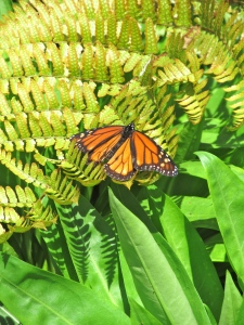 """Butterflies are not insects . . . They are self-propelled flowers."" -- Robert A. Heinlein"