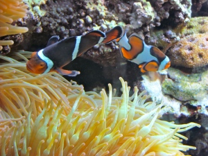 "Little ones clustered around the tank containing these clown fish excitedly pointed out ""Nemo"" and ""Marlin."""