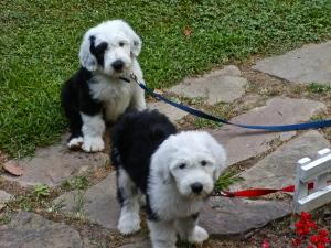 Puppy-sized M&M.