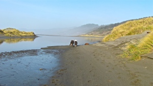 Mac and Molly racing along, sides touching as always, at Pistol River, Gold Beach, Oregon.