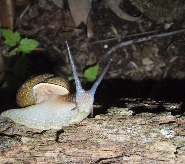 Snail_animal